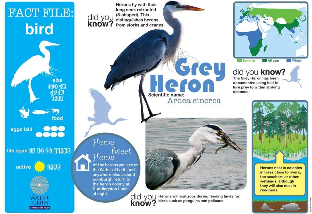 Birds Fact Sheet