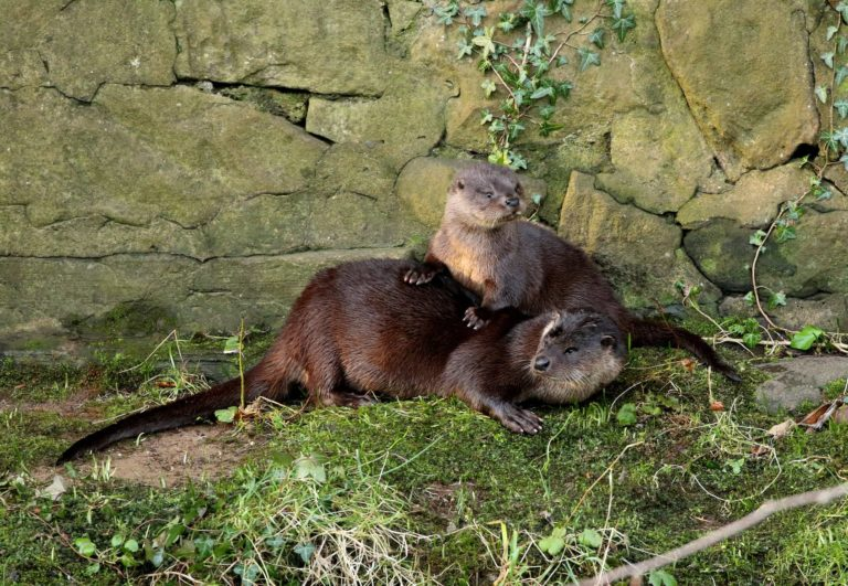 Otter and Cub, Bill Brown