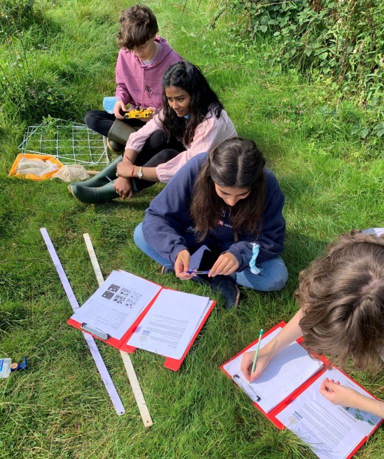 Meadow Survey